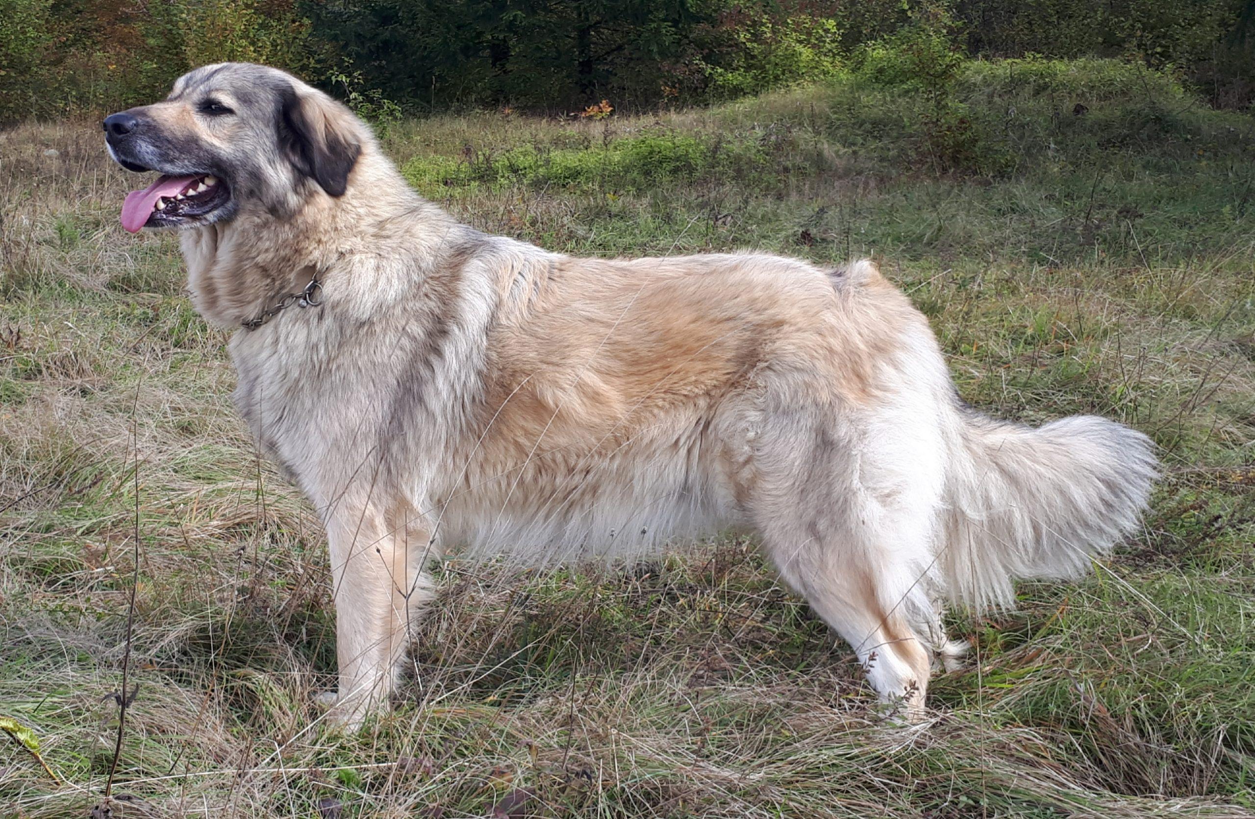 ŠO-Hadis (4)